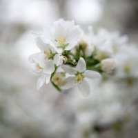 Flower :: Anna Lipatova