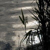 Озеро :: Людмила Синицына
