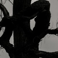 Иероглиф -- долгожитель :: Людмила Синицына