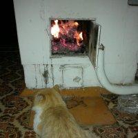 Кот у печки :: Павел Михалев