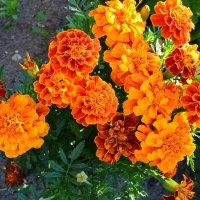 Оранжевое настроение. :: zoja