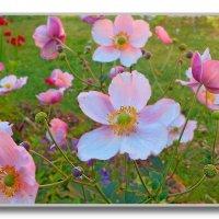Танец цветов в лучах заходящего солнца :: Григорий Кучушев