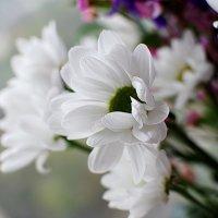 Хризантемы :: Анастасия Смирнова