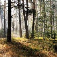 Сентября рассветные туманы... :: Лесо-Вед (Баранов)