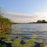 озеро в пойме :: Валерия Шамсутдинова