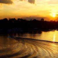 Расплескалось солнце золотом... :: Валентина Данилова