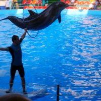 Летающие дельфины :: Алексей Симаков