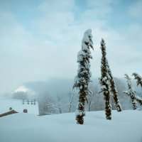 После снегопада... :: алексей афанасьев