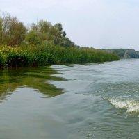 На реке. :: Чария Зоя