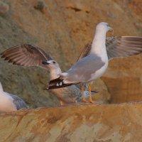 Чайки :: Serega Денисенко