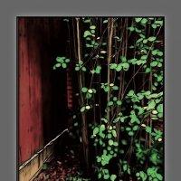 Уголок в саду :: Григорий Кучушев