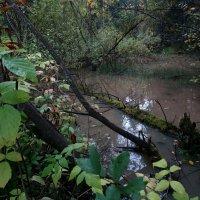 Лесная вода :: Валерий Чепкасов