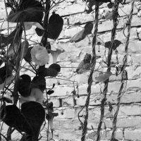 черно-белые моменты :: Нади часоК