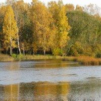 У реки осенью :: Наталья