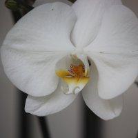 Цветочный хоровод-564. :: Руслан Грицунь