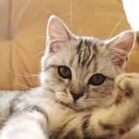 Selphy-Cat :: Иван Новоселов