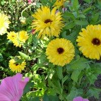 Осенние цветы. :: zoja