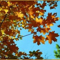 Золотая осень :: Андрей Заломленков