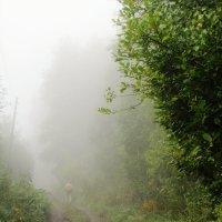 В тумане :: Galaelina ***