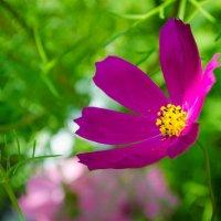 Цветок :: Ivanova .