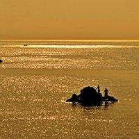 Золотое купание :: Александр Бойко
