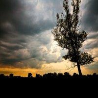 Осень. Скучно. Ветер воет. :: Татьяна Губина