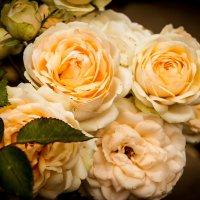 розы :: олеся тронько