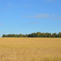 Пшеничное поле :: Оксана Белова