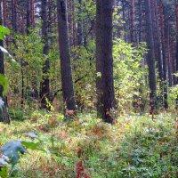 В густом лесу . :: Мила Бовкун