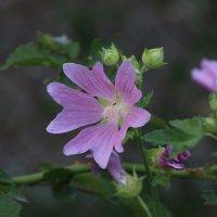цветок :: Жанна