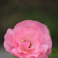 Цветочный хоровод-575. :: Руслан Грицунь