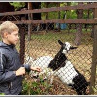 мальчик и козел :: юрий