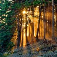 Последние лучи солнца уходящего дня :: Мария В