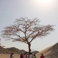 секрет пустыни :: Елена Кечиева