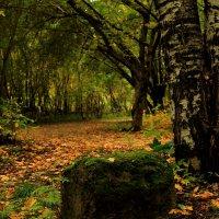 .осень.. :: Игорь
