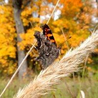Яркие краски осени :: Вик Токарев