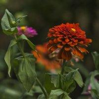 Августа цветы ... :: Ольга Винницкая (Olenka)