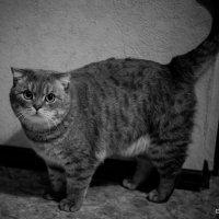 Котик :: Дмитрий Чулков