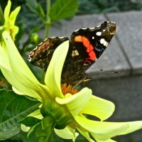 бабочка и цветок :: Елена