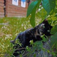 Странный кот :: Валентин Кузьмин