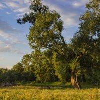 У леса, на опушке. :: Альмира Юсупова