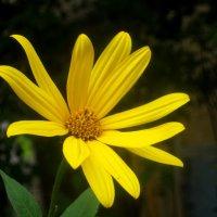 Последний цветок сентября :: Елена Семигина