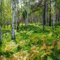 Сентябрьский лес. :: Rafael