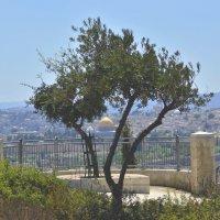 Jerusalem :: Eddy Eduardo