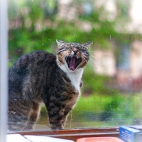 Я кричу,а ты меня не слышишь. :: Андрей Куприянов