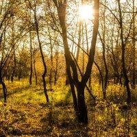 природа :: Жанна Кузнецова