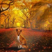 Осенний Пёс :: Smirnov Aleksey Смирнов