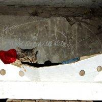 дом бездомных кошек :: Вадим Виловатый