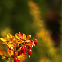 В цветах осени :: Михаил Лобов (drakonmick)
