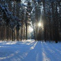 Зима :: Зоя Мишина